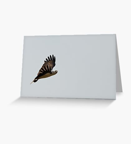 White Bellied Sea Eagle Greeting Card