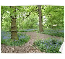 """""""Trail""""  Swithland Woods, Leicestershire Poster"""