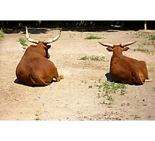 Wild buffaloes Photographic Print