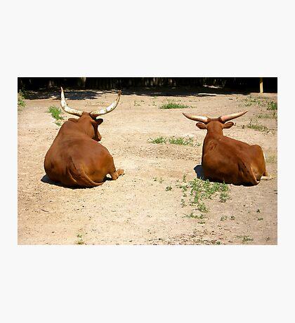Wild buffaloes Photographic Print