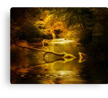 Mystery in a Forest Canvas Print