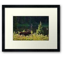 Moose At Brainard Framed Print