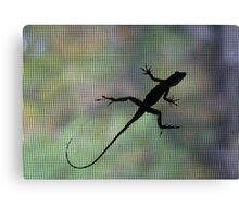 Lizard with Many Colors Canvas Print