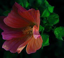 In The Wind ! by Elfriede Fulda