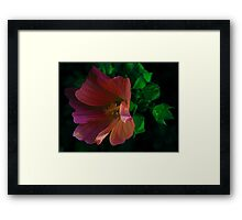 In The Wind ! Framed Print
