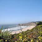 Our Lovely Coast by NancyC