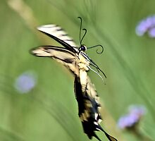 Swallow Tail by SuddenJim
