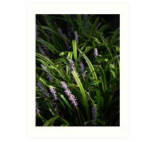 Plants Accented with Light Art Print