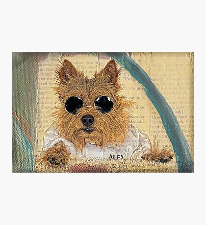 Norwich Terrier in Cool Shades Photographic Print