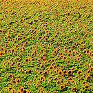 The Field of Sunflowers by Maryna Gumenyuk
