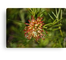 Unfolding Grevillia Red Canvas Print
