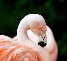 Portrait of a pink flamingo by torishaa