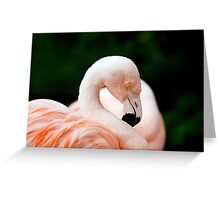 Portrait of a pink flamingo Greeting Card