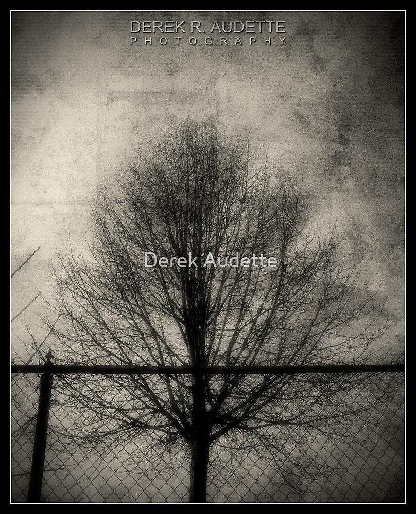 Barren Tree by Derek Audette