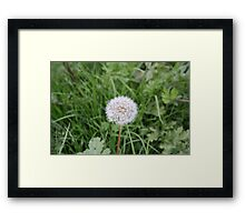 Dandelion With All It Petals On  Framed Print