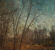 Barren Trees Near the End of Winter by Derek Audette