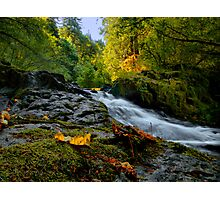 Don't Hold Back ~ Sweet Creek ~ Photographic Print