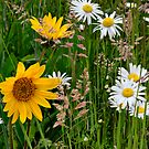 Mixed Group ~ Wildflowers ~ by Charles & Patricia   Harkins ~ Picture Oregon