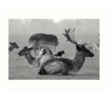 Wild Deer & Blackbird, Phoenix Park, Dublin Art Print