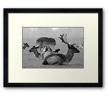 Wild Deer & Blackbird, Phoenix Park, Dublin Framed Print