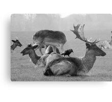Wild Deer & Blackbird, Phoenix Park, Dublin Metal Print