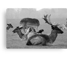 Wild Deer & Blackbird, Phoenix Park, Dublin Canvas Print