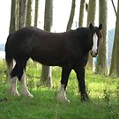 Clydesdale In The Forest by louisegreen
