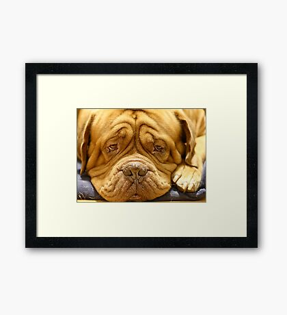 But why cant I have a bone ?? Framed Print