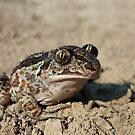 Common Spadefoot (Pelobates fuscus) by Istvan froghunter