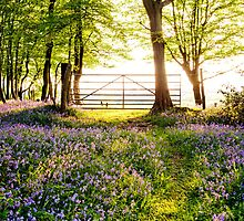 Magical Bluebell Woods by samcmoore