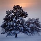 Ashdown Forrest Snow Scene by samcmoore