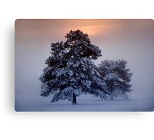 Ashdown Forrest Snow Scene Canvas Print