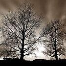 """Two Tree's"" by Husky"