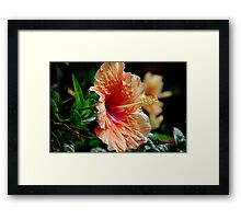 Typical Flower Framed Print