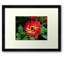 A Touch Of Red & Yellow Framed Print