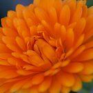 Orange Flower 2 by Jena Ferguson