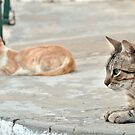 Cats by mariohipolito