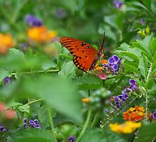 The Butterfly Garden by Judy Wanamaker
