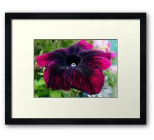 A Touch Of Velvet  Framed Print