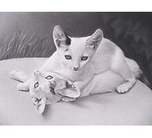 Playful Kittens Photographic Print