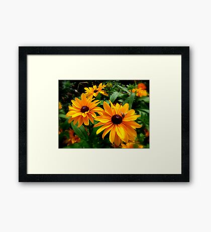 Flying around Framed Print