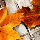 Autumn on asphalt by DavidCucalon