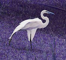Fantasia Heron by Anangeli