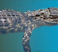 Alligator Watching You by Anangeli