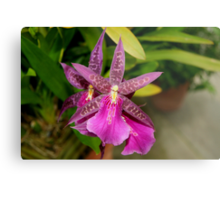 Summer Purple -  Millassia Dark Star orchid Metal Print