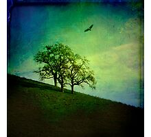 Oak Trees and Hawk Photographic Print