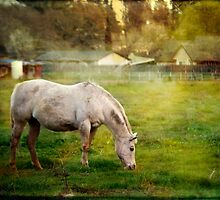 White Horse by Lynn Starner