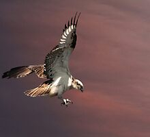 Nest Landing by byronbackyard