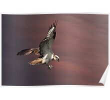Nest Landing Poster