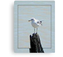 Birds eye view © Canvas Print